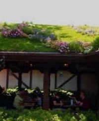 zelene-strechy-1_0.jpeg