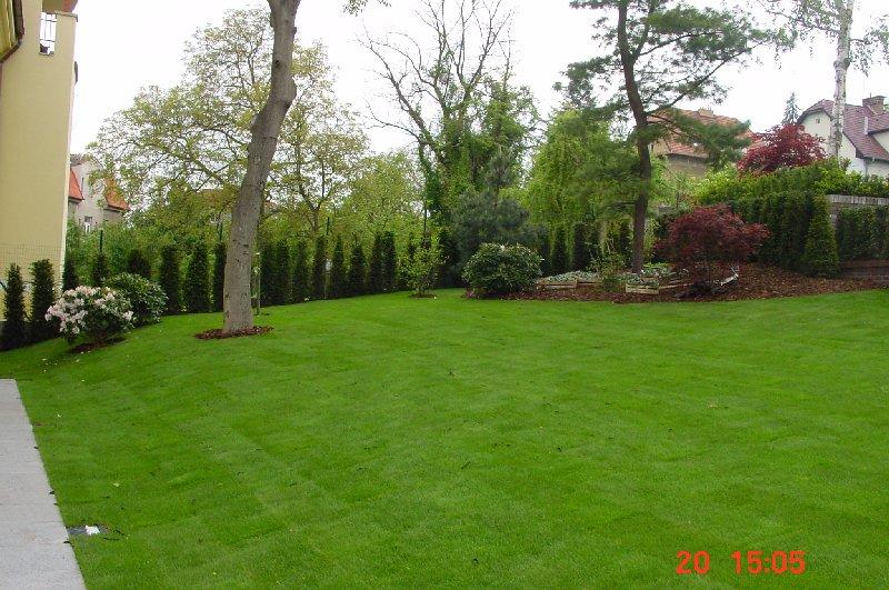 realizace-zahrady-okrasne-dreviny-travni-koberec-8_1.jpg